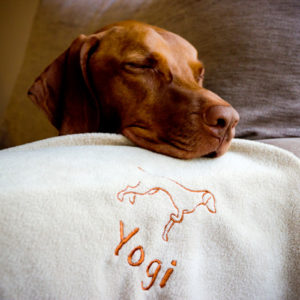 Personalised Vizsla Blanket